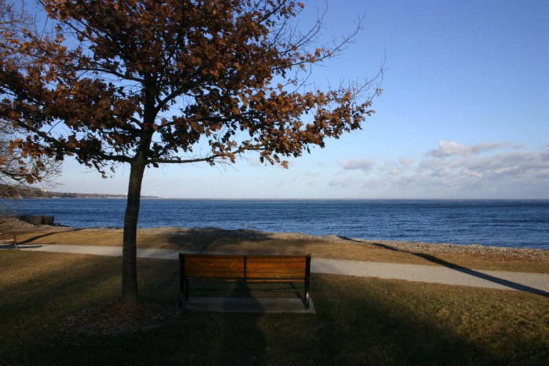 Tree and bench by Lake Ontario