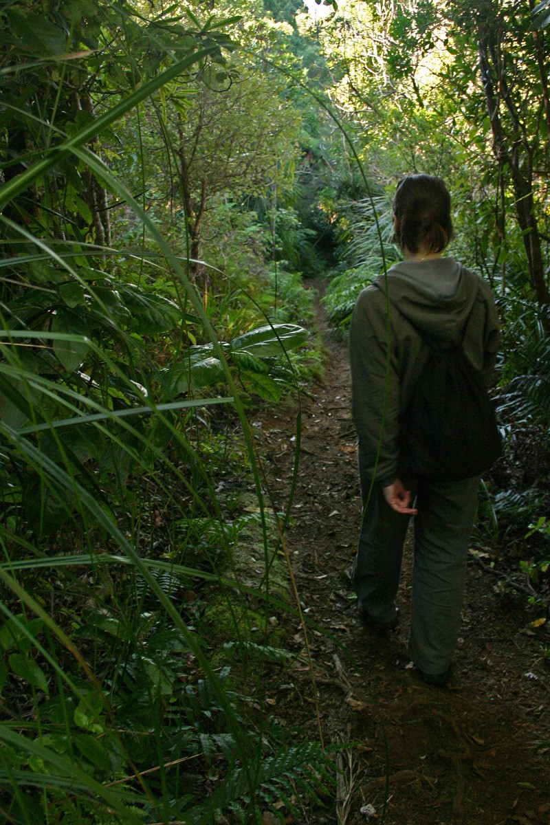 Hiking in Waitakere Ranges