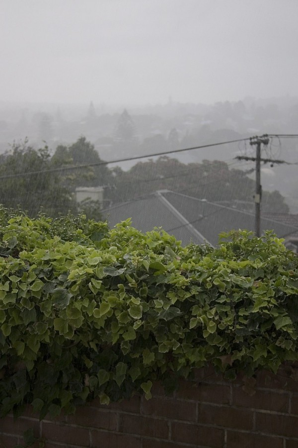 Rainy day in Mount Eden