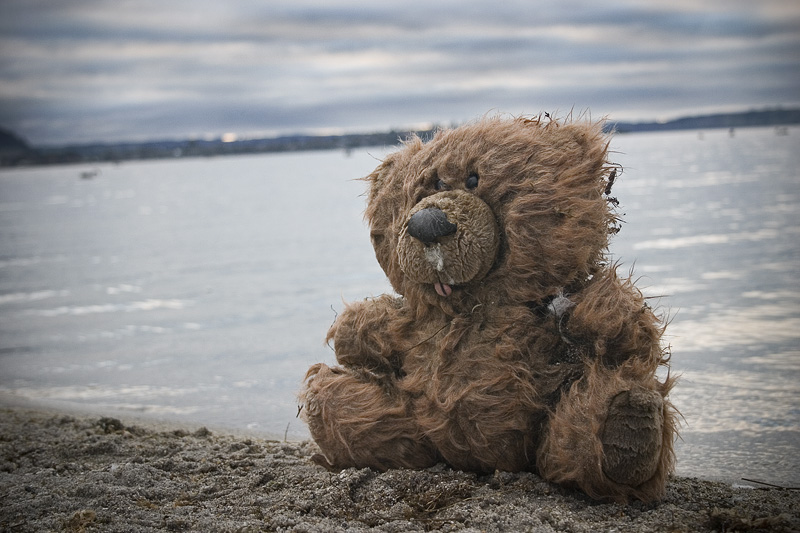 Teddy Bear, lonely by the sea