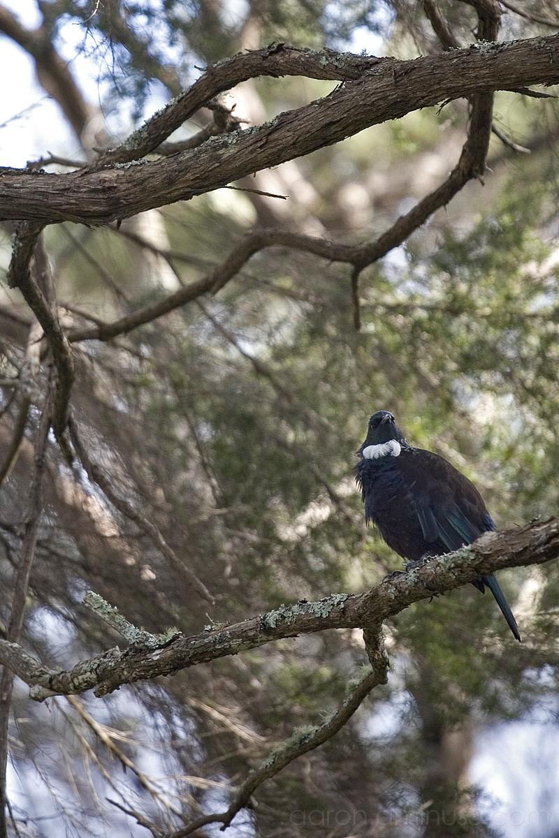 Bright bird on branch