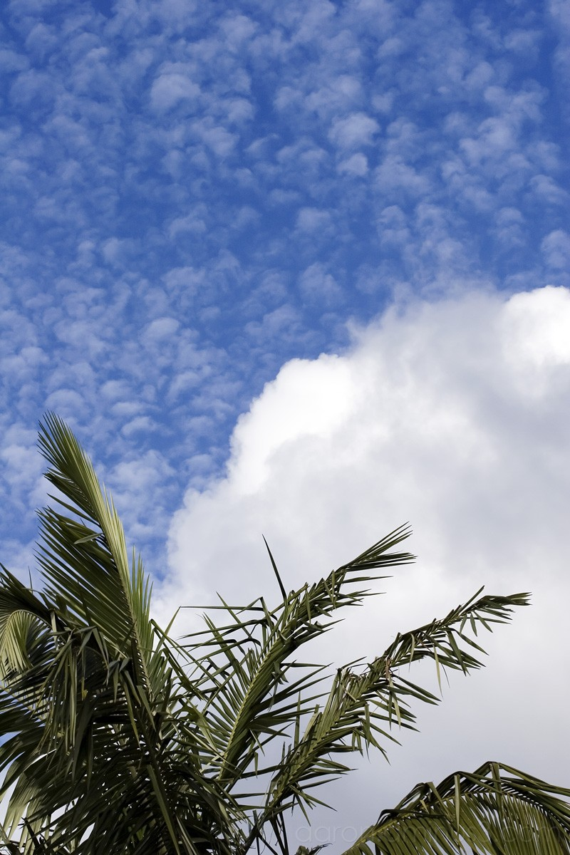 Palm tree over blue sky clouds