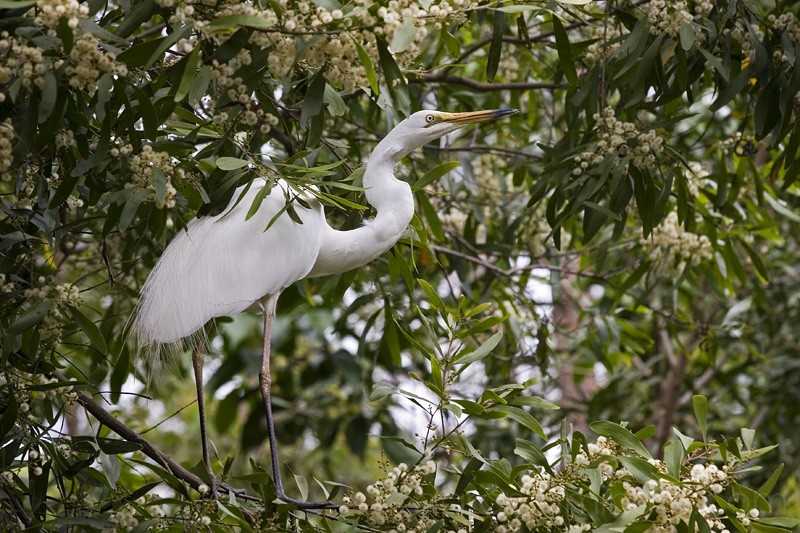 Crane in the tree