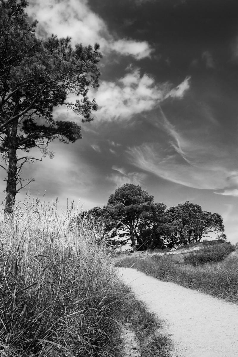 Along the path, Hahei