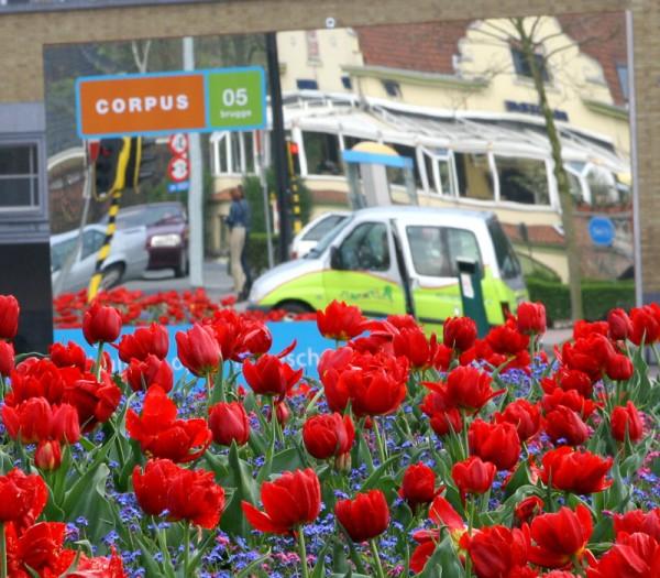 Brugge Tulips