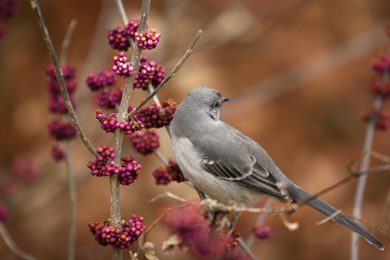 Birdie in the Park