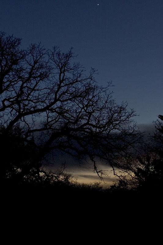 Spooky Trees (part II)