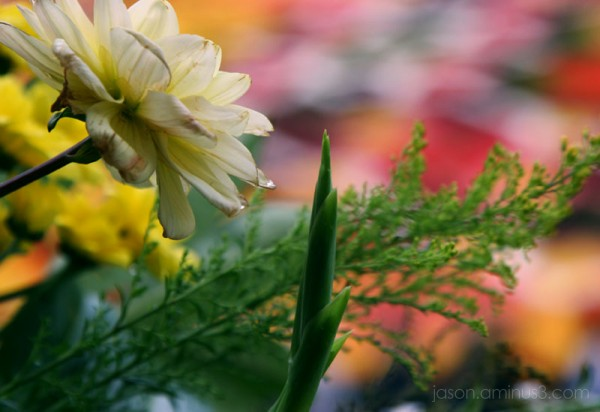 Tapis de Fleur Colorful Backdrop