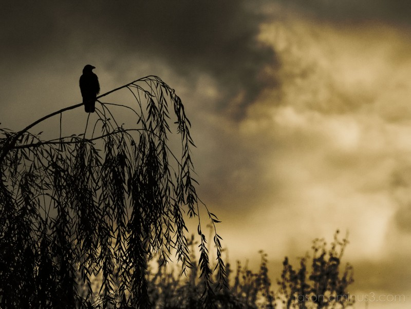 Moody Raven and Clouds