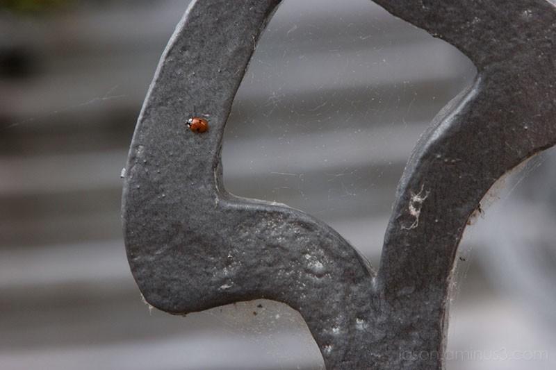 ladybug metal fence web