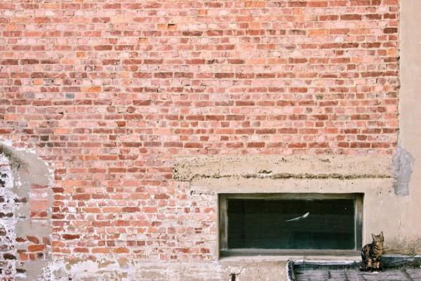 cat bricks