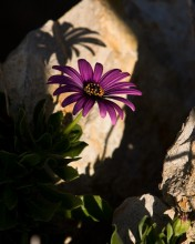 Rocks and Flower