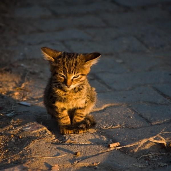 street kitten