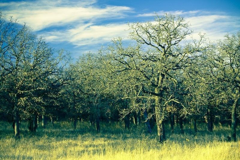 surreal fractal tree