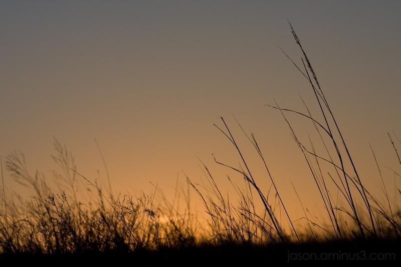 weeds sunset