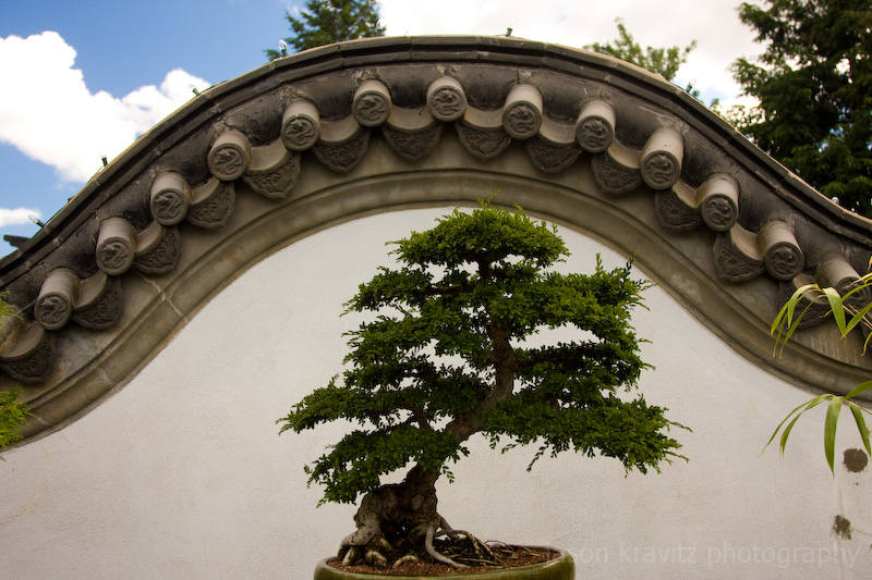 Montreal Botanical bonsai tree