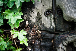 face in ivy