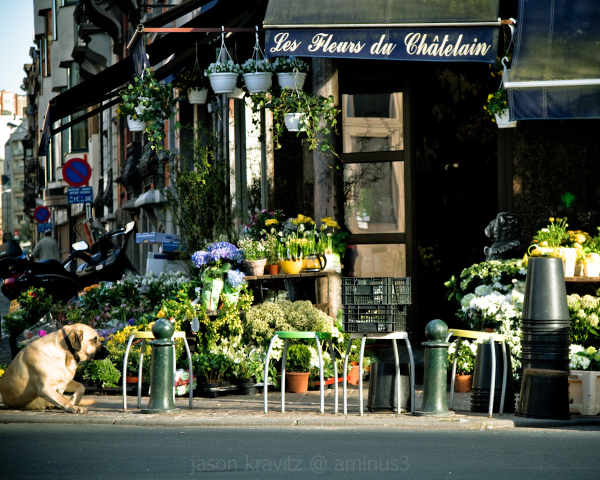 chatelain flower store