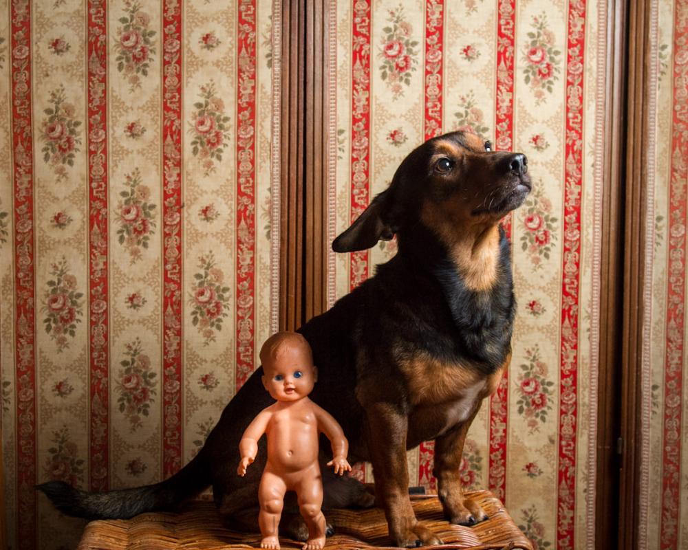 baby doll dog