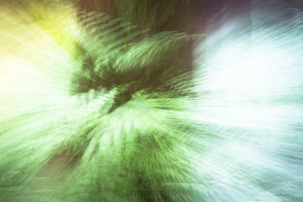 zoom blur fern