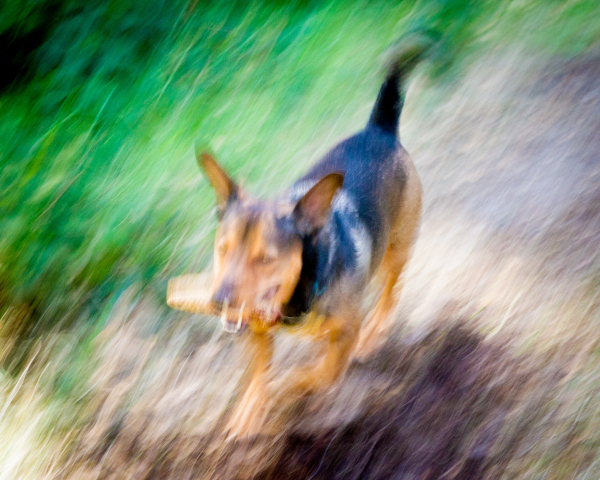 dog motion blur