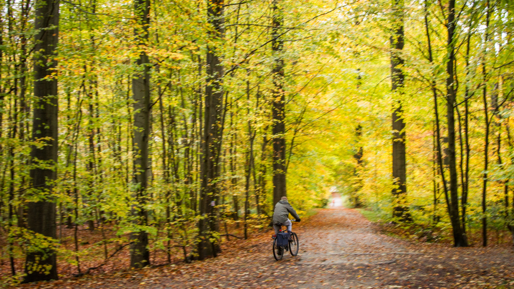 bike forest belgium