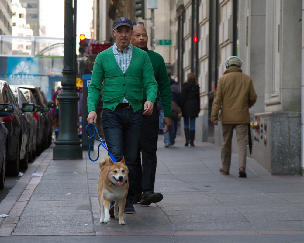 dog walker new york