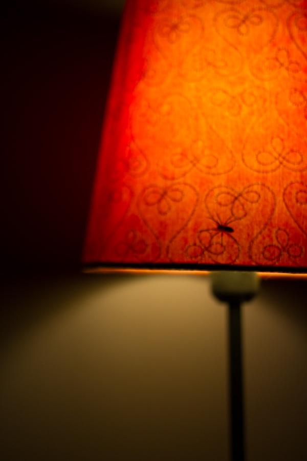 shallow spider