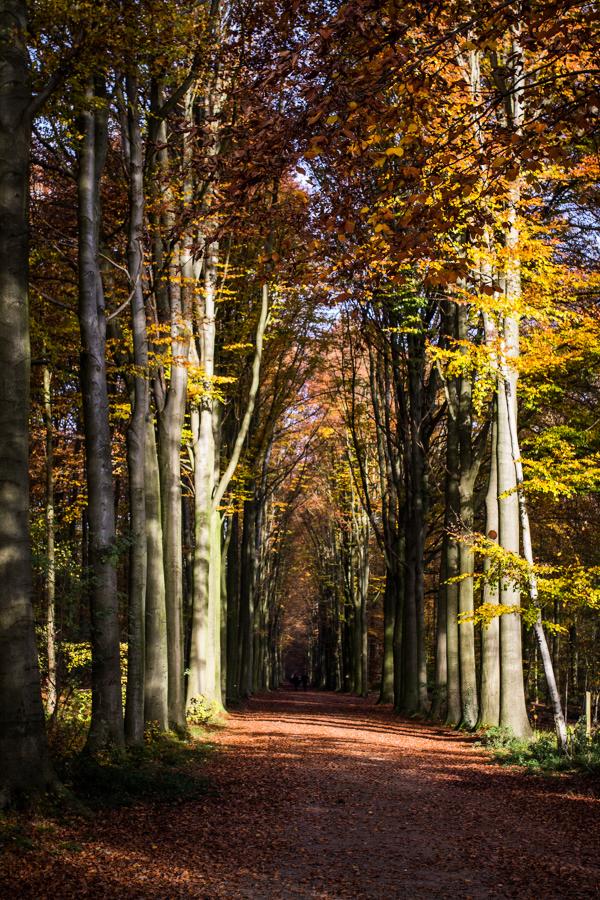 belgium forest tervuren