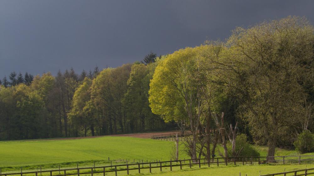 moody tree storm