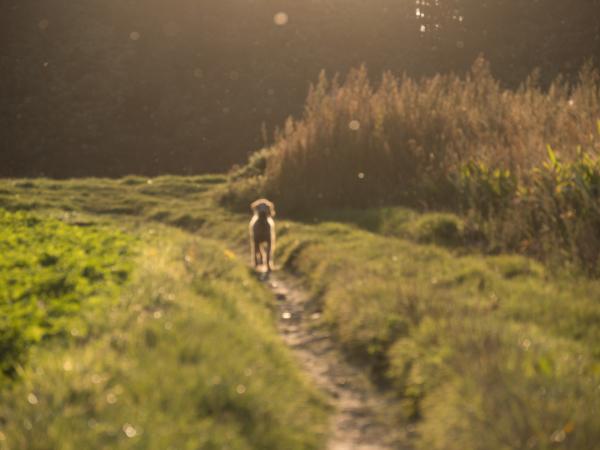 dreamy dog sunset