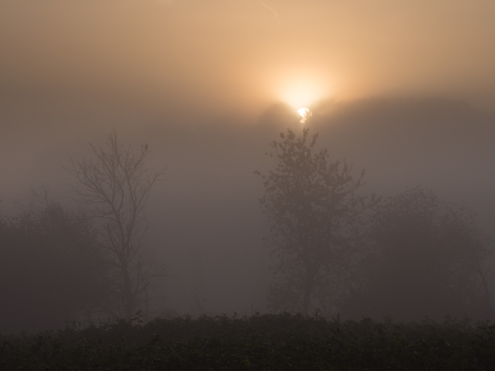 glorious fog sunrise