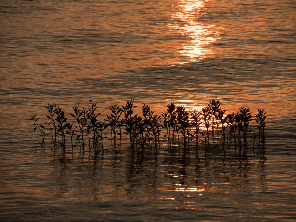 lake latonka oklahoma sunst