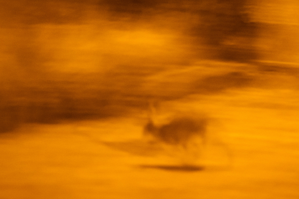 big hare night