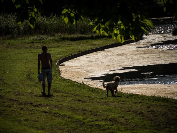 along the dog pond