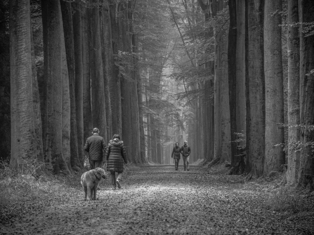 forest walk brussels