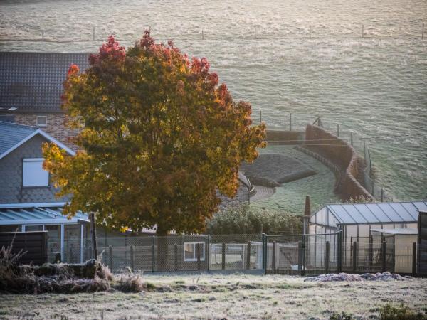 autumn tree frost