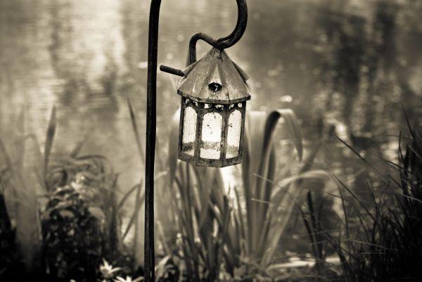 lantern in marsh