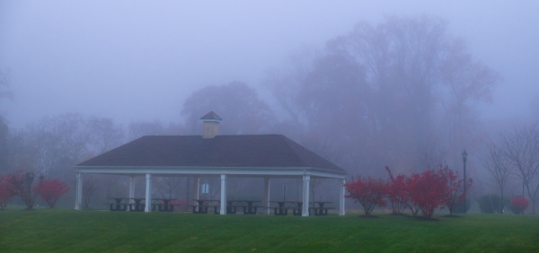 Foggy Day with Red Trees