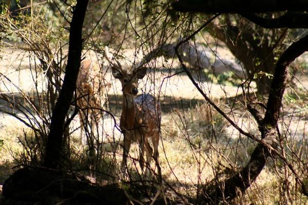Deers in the wild.