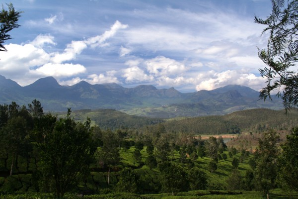 Munnar Kerela scenic nature mountain Western Ghats