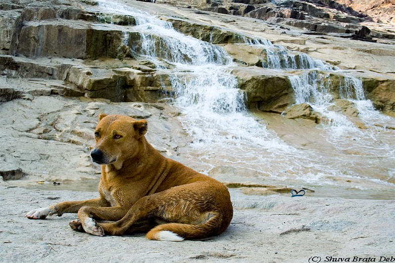 A dog enjoying Kuntala waterfalls andhra pradesh