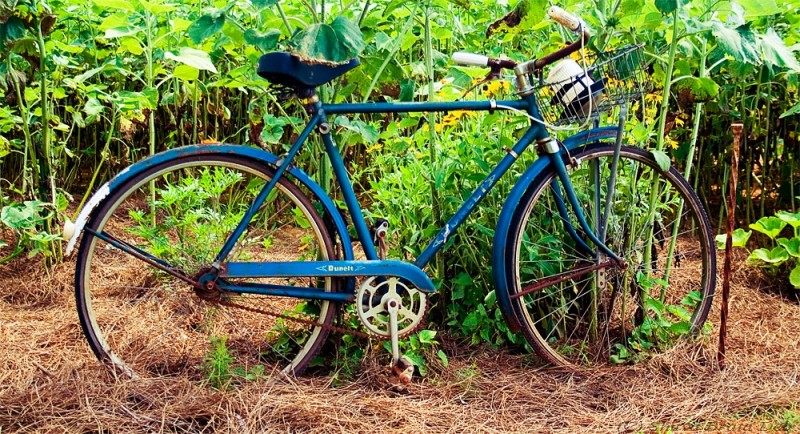 An old bicycle