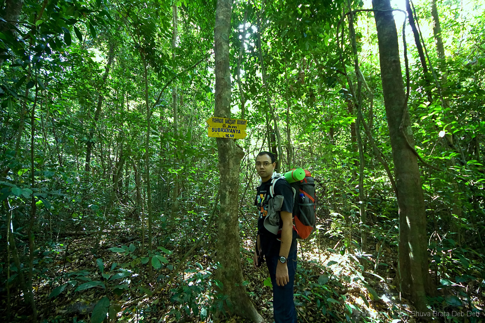 Trekking in the dense jungle