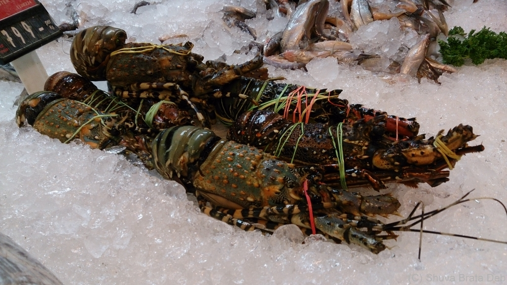 Tell me you dont like lobsters