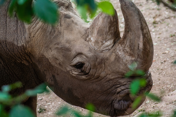 Rhinoceros is different than Dinosaurs. Really?