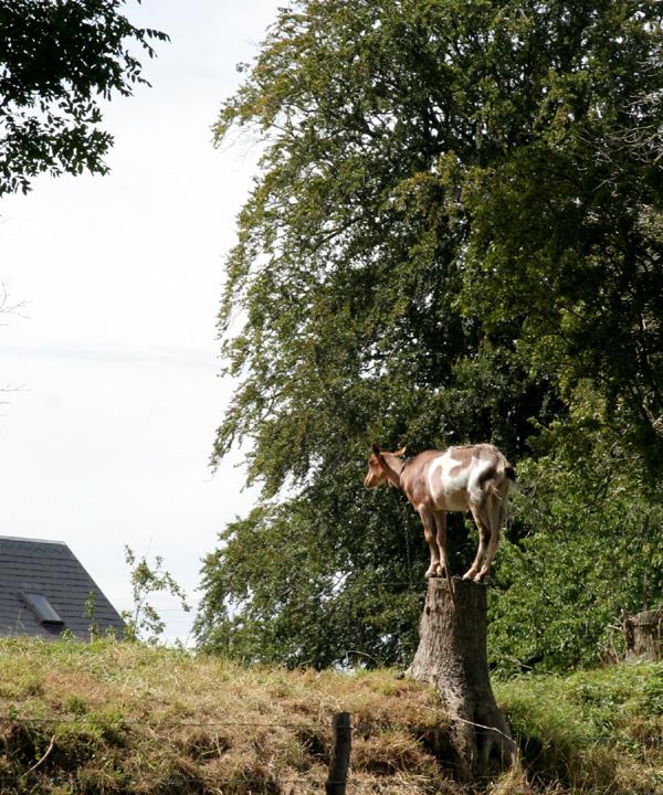 Goat on the origin