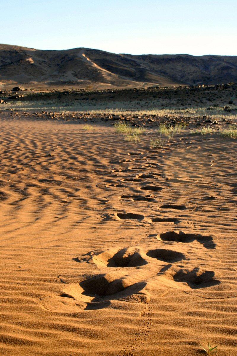 Tracks of the lonesome touareg.