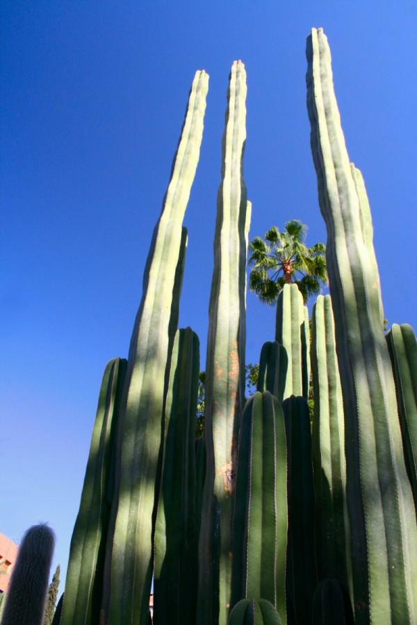 Le monde entier est un cactus.