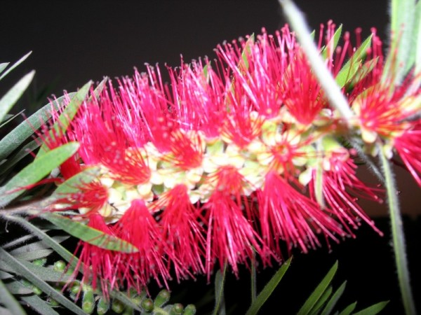 Flower - Not a bottle cleaning brush :-)